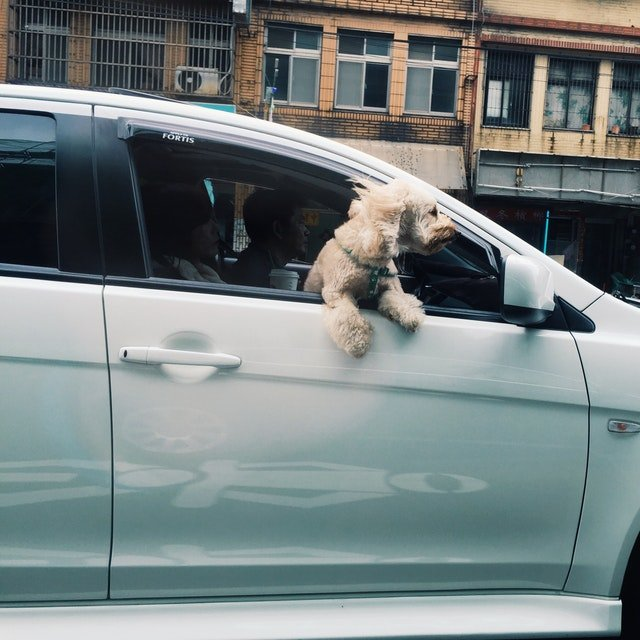 Living in the present moment like a dog with his head out the car window.